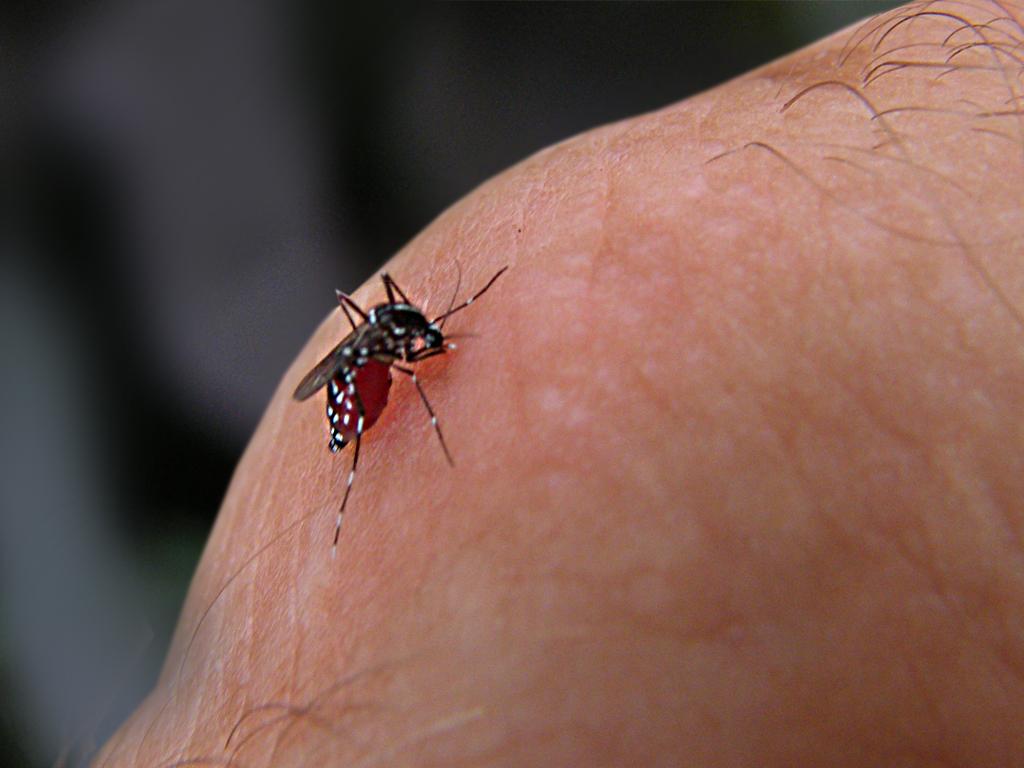 Arboviroses: levantamento apresenta redução de índice de infestação pelo Aedes Aegypti em Mossoró