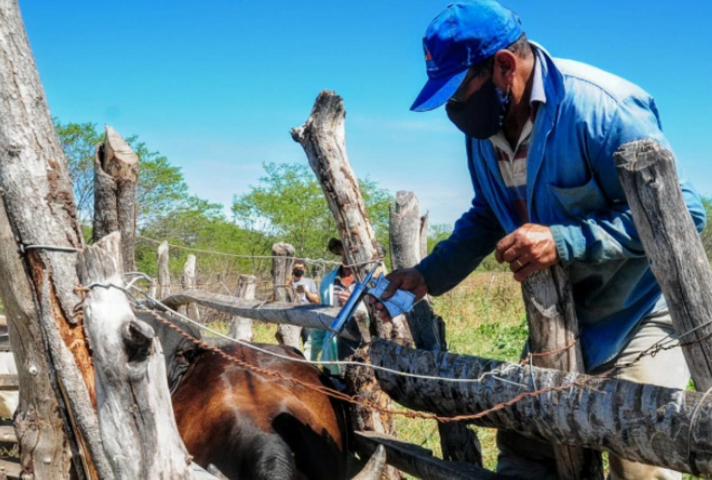 Campanha de vacinação da febre aftosa imuniza quase 3 mil animais em Mossoró