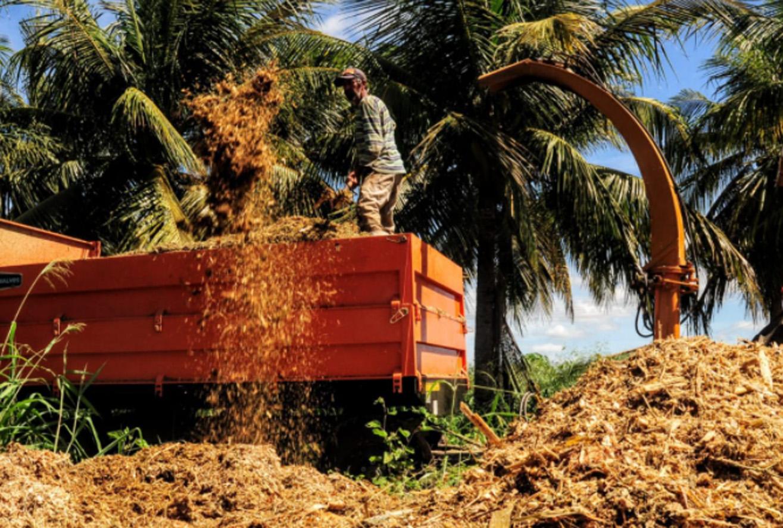 Programa Mossoró Forragem já produziu mais de 650 toneladas de silagem