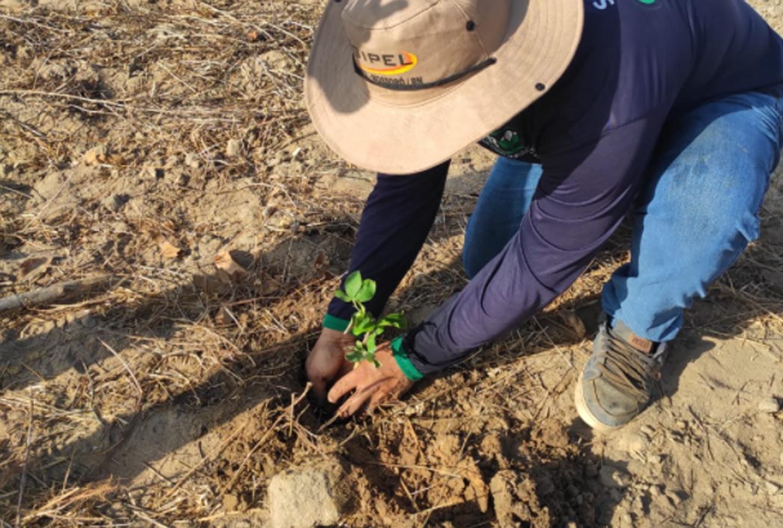 Secretaria realiza plantio de mudas com hidrogel no Assentamento Jurema