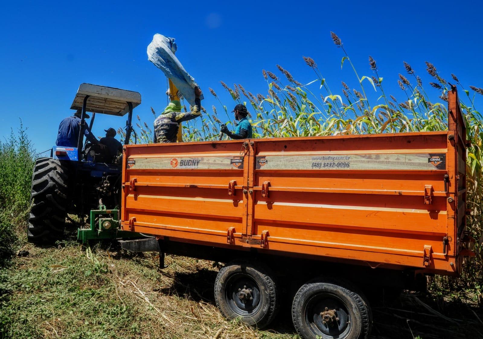 Mossoró Forragem produz em torno de duas mil toneladas de silagem