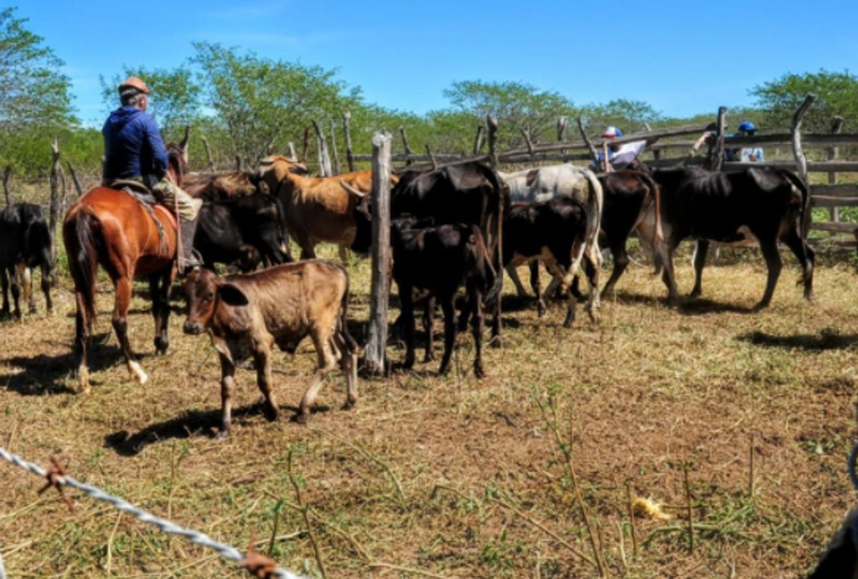Febre aftosa: Secretaria de Agricultura divulga calendário de retorno para vacinação