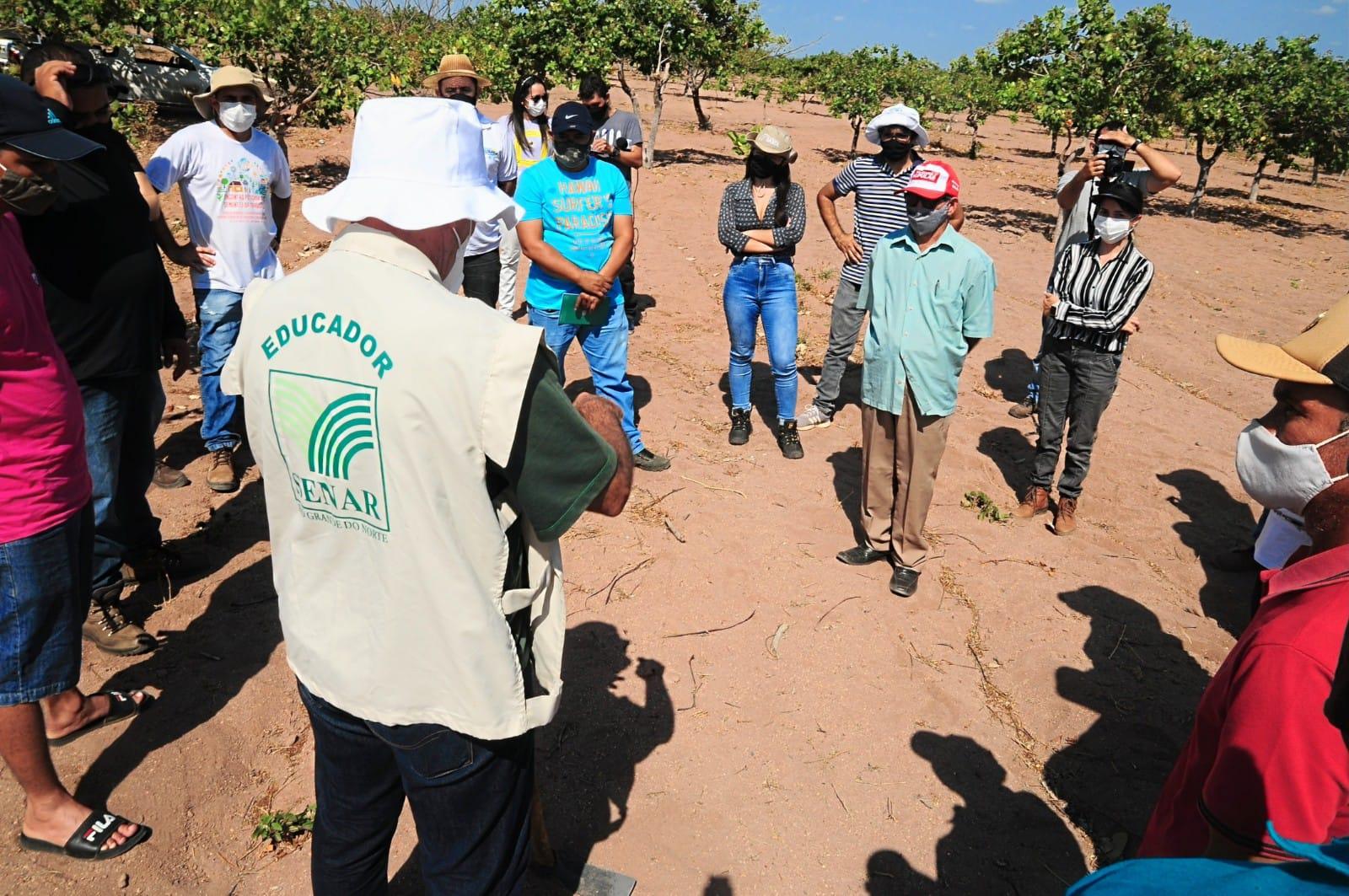 Aula prática ensina a produtores rurais a enxertia e poda de cajueiro
