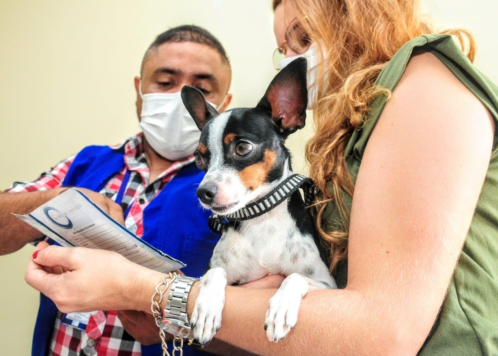 Vacinação antirrábica acontece hoje em 25 pontos de Mossoró