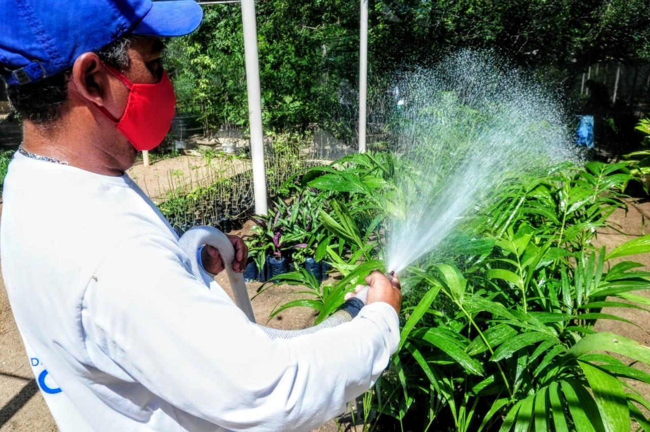 Horto Florestal de Mossoró já produziu 15 mil mudas neste ano