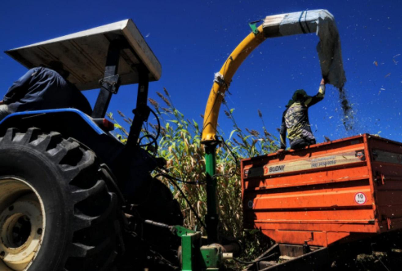 Mossoró Forragem passa de mil toneladas produzidas em 16 comunidades rurais