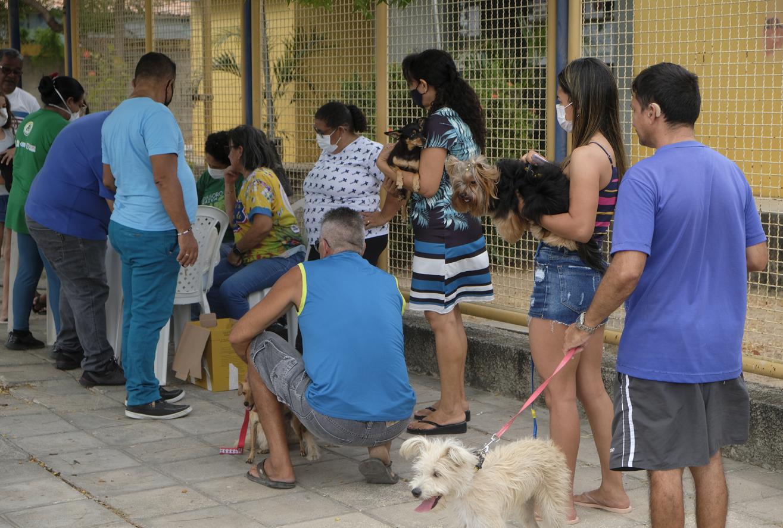 Mossoroenses aproveitam feriado para vacinarem animais contra a raiva