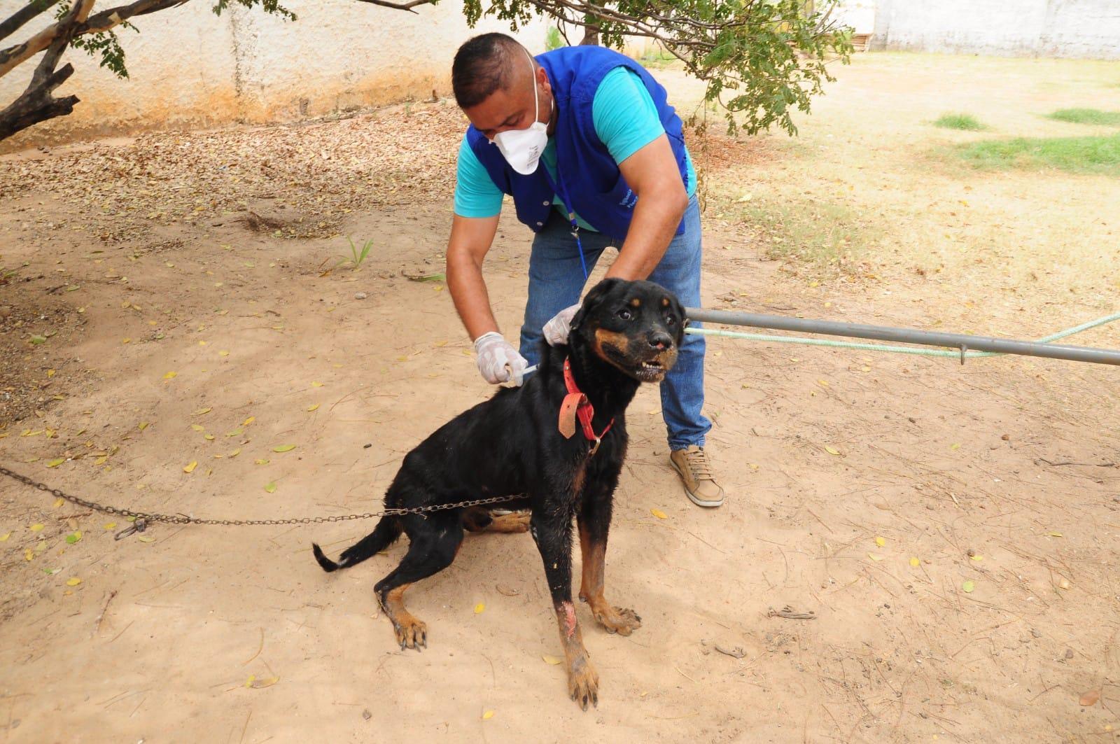 Campanha de vacinação antirrábica começa em Mossoró com doses para cães e gatos na sede do CCZ