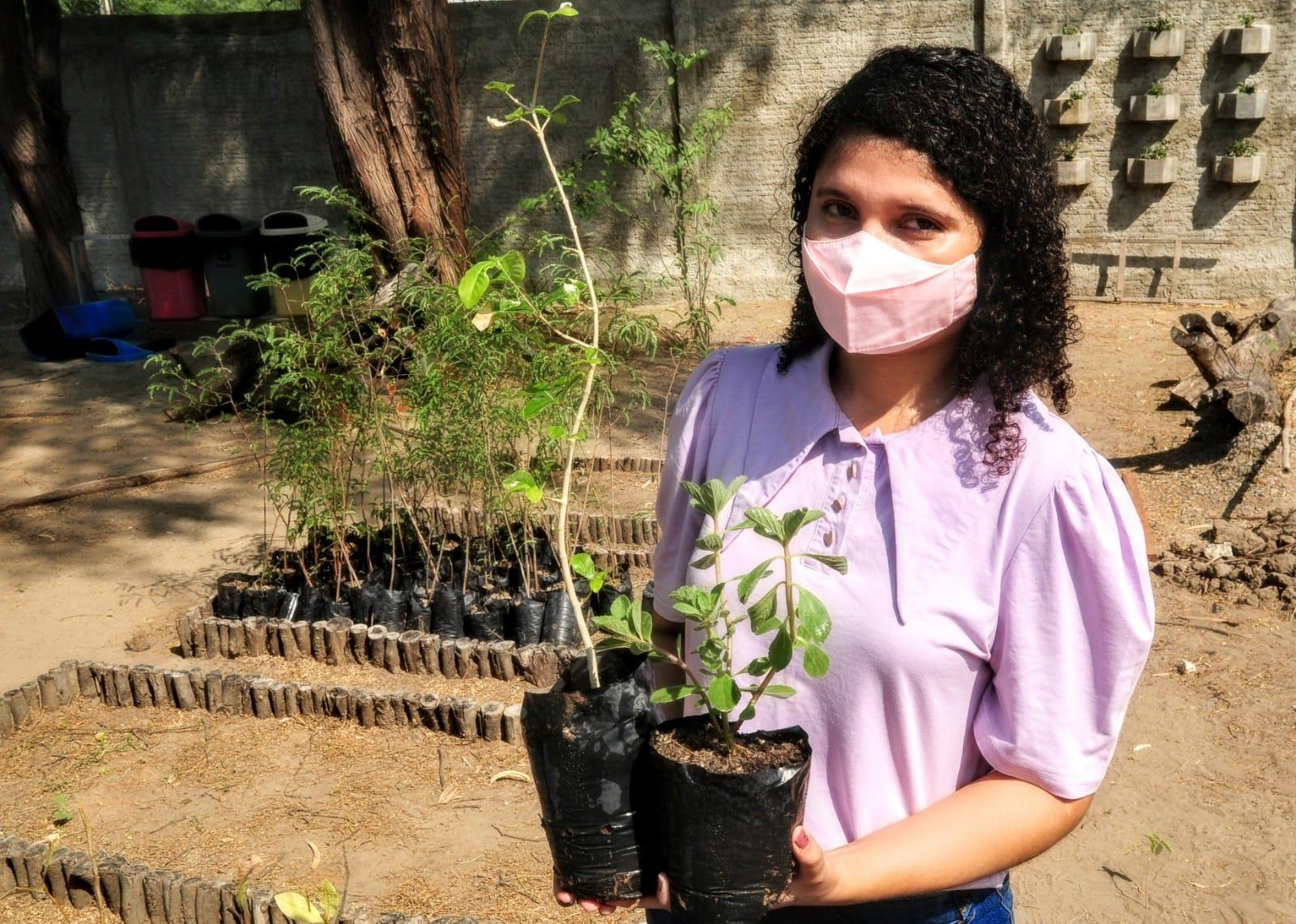 """""""Mossoró Verde"""": Distribuição de mudas acontece às sextas-feiras e sábados"""