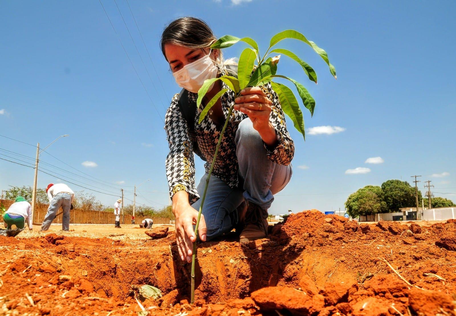 Canteiro da avenida Centenária recebe 150 mudas frutíferas no Dia Mundial da Árvore