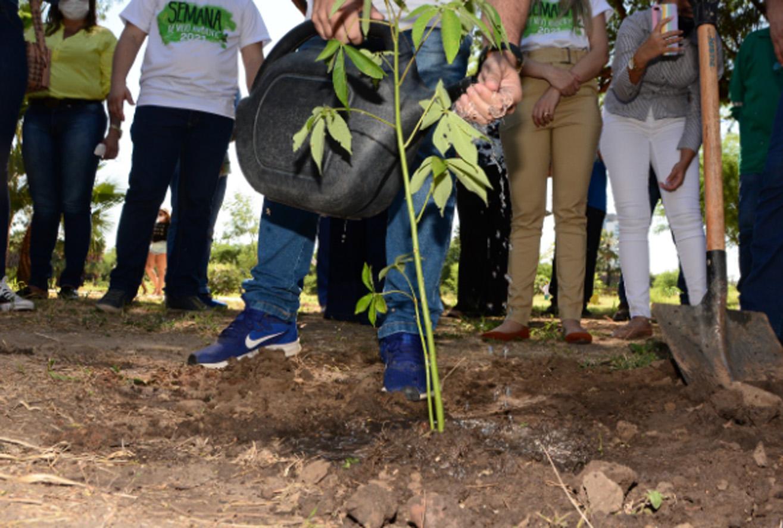 Semana do Meio Ambiente é encerrada com homenagem às vítimas da Covid-19