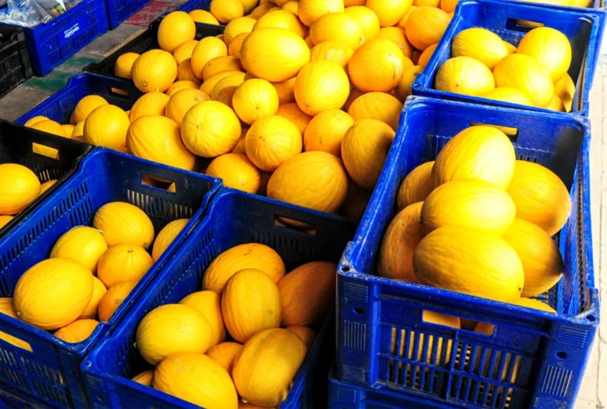 Evento na Praça Cícero Dias marca início da safra do melão para exportação