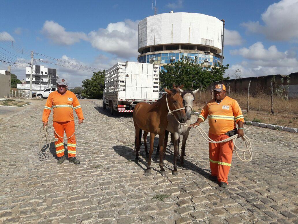 Secretaria de Serviços Urbanos apreende animais perdidos na cidade