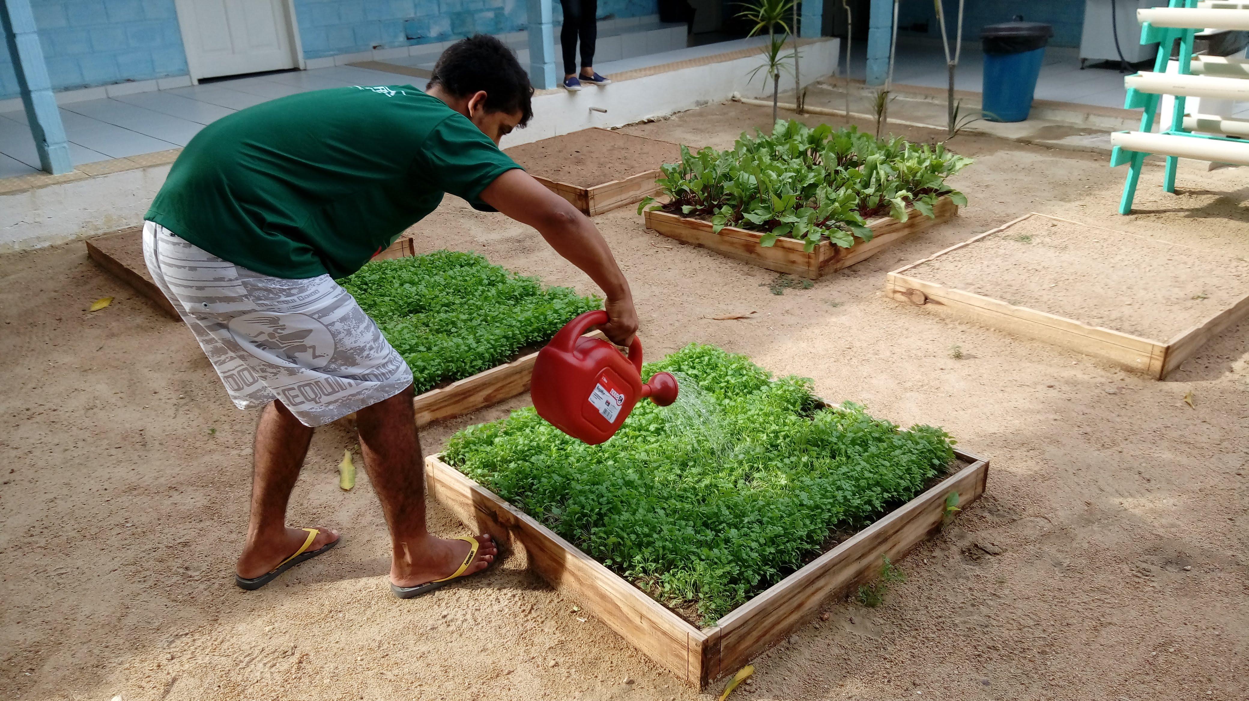 CAPS AD III adota cultivo de horta orgânica  como terapia alternativa para pacientes